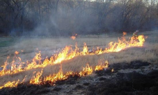 Upozorenje: Nekontrolisano spaljivanje suhe trave i korova će biti sankcionisano