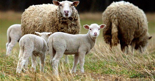 Najava: Podjela steonih krava, koza, ovaca, plastenika i motokultivatora, u sklopu projekta iz oblasti poduzetništva, obrta i poljoprivrede