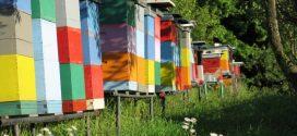 """Projekat """"Farma II"""": Dodjela bespovratnih sredstava za poboljšanje konkurentnosti u sektoru pčelarstva"""