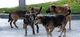 Dojave građana: Čopori pasa lutalica u funkciji zaštite pojedinih privrednih objekata!?