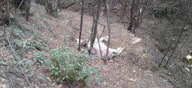Nakon odloženih ovčijih glava uz put Pope-kamenolom mislili smo da se ne može desiti teži slučaj: Ipak može, na području Dumanca uginula krava odložena u prirodu, bez zakopavanja