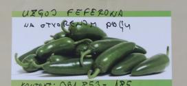 Najava: U četvrtak potpisivanje ugovora o uzgoju i otkupu zelenog feferona između kakanjskih poljoprivrednih proizvođača koji su se do sada prijavili na projekat i njemačke firme Carl Kuehne