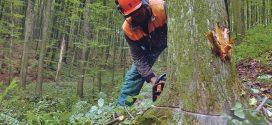 U kakvom stanju su danas naše šume? Pročitajte šta nalažu zakonske odredbe!