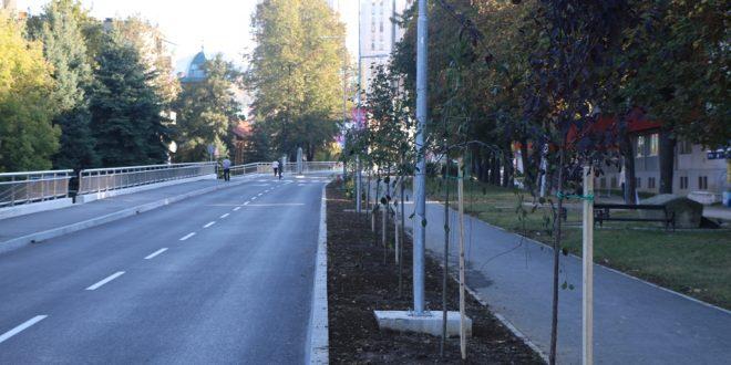 Zelenilo na prvom mjestu: Uz rekonstruisanu glavnu gradsku saobraćajnicu zasađeno više od 80 novih sadnica drveća