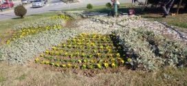 """Foto: Aktuelni radovi, sadnja cvijeća na javnim površinama, radove finansira Općina Kakanj, a izvodi """"Vodokom"""""""