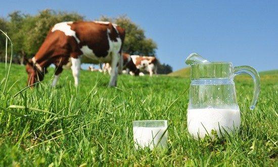 Pogledajte prilog FTV o proizvodnji svježeg kravljeg mlijeka u Kaknju