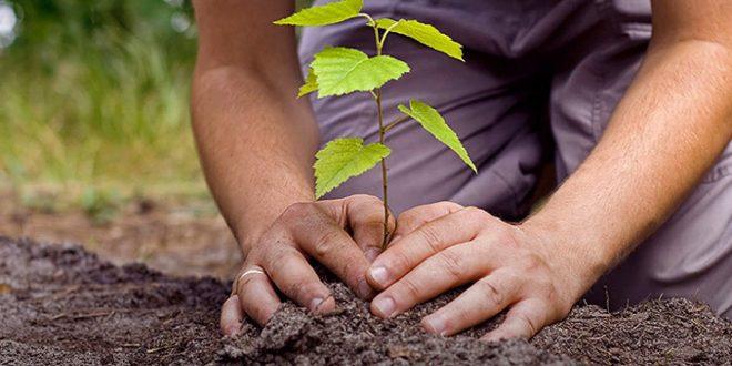 Obavijest za vlasnike privatnih šuma: Obezbjeđen besplatan sadni materijal